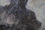 Carla Raadsveld - Koe - 100 x 100 x 8 - acryl op doek - op spieraam