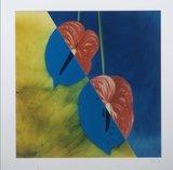 Jean Ruiter - Araceae Anthurium  - 78 x 78 cm - foto op fotopapier - ingelijst