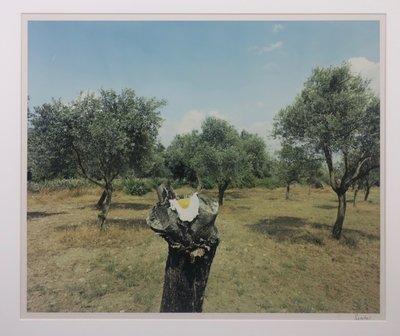Jean Ruiter - The Eggplant  - 78 x 83 cm - foto op fotopapier - ingelijst