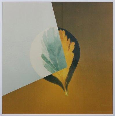 Jean Ruiter - Peperomia obtusiefolia variega  - 83 x 83 cm - foto op fotopapier - ingelijst