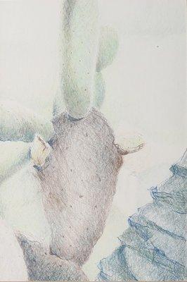 Eveline de Boer - Detail cactus - 43 x 30 cm - Potloodtekening op papier